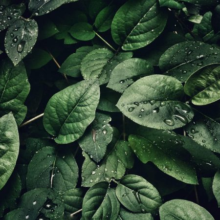 close-up-photography-of-leaves-with-droplets-807598-2500
